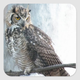 Beautiful and Regal Female Great Horned Owl Square Sticker