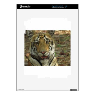 Beautiful and Smiling Tiger Decals For The iPad 2