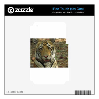 Beautiful and Smiling Tiger iPod Touch 4G Decal