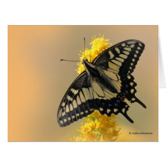 Beautiful Anise Swallowtail Butterfly in the Sun Card