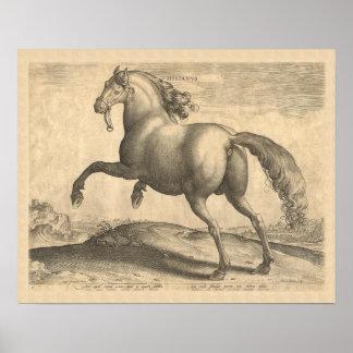 Beautiful Antique Spanish Stallion Elegant Poster