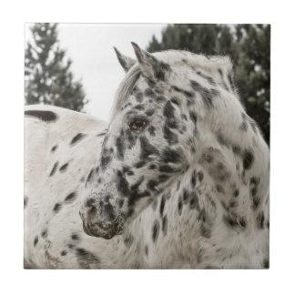Beautiful Appaloosa Horse Ceramic Tile