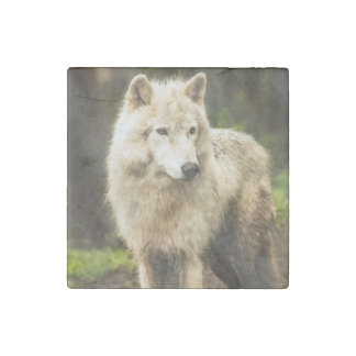 Beautiful Arctic Wolf in Spring Photo Stone Magnet