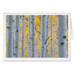 Beautiful Aspen Trees Greeting Card