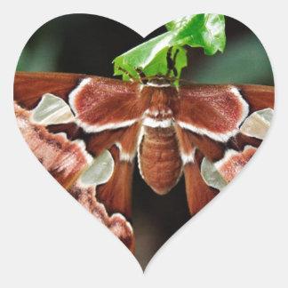 Beautiful Atlas Moth Heart Stickers