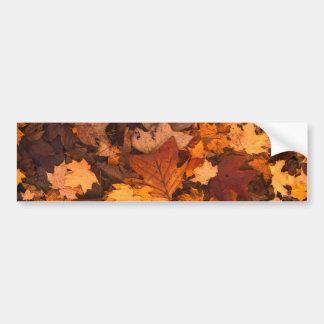 Beautiful Autum Foliage Design. Bumper Sticker