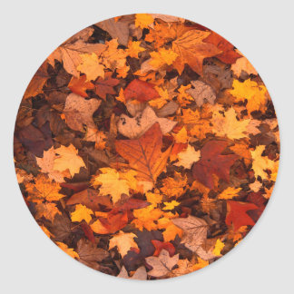 Beautiful Autum Foliage Design. Classic Round Sticker