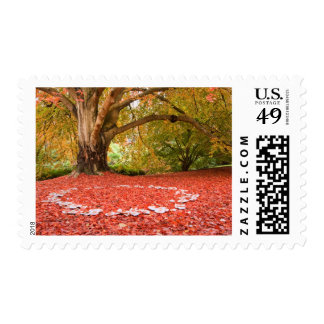 Beautiful Autumn Fall Nature Fairy Ring Postage Stamps