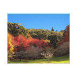 Beautiful Autumn Leaves Canvas Stretched Canvas Prints