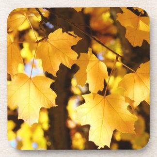 Beautiful Autumn Leaves cork coasters Holidays