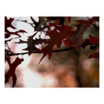 Beautiful Autumn Leaves Poster