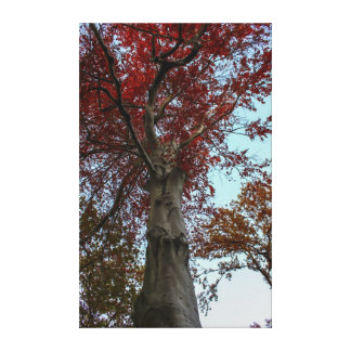 Beautiful Autumn Tree in Central Park Canvas Print