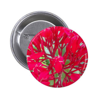 Beautiful Awesome Red flowers Pinback Button