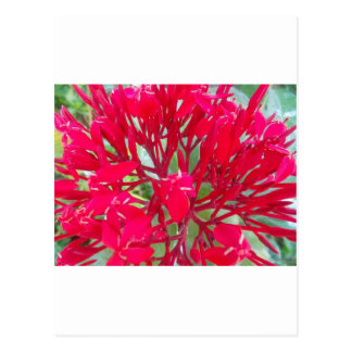 Beautiful Awesome Red flowers Postcard