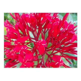 Beautiful Awesome Red flowers Postcard Horizontal