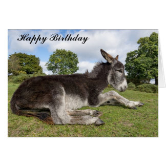Beautiful baby Donkey Birthday Card