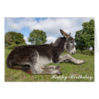 Beautiful baby Donkey Birthday Card
