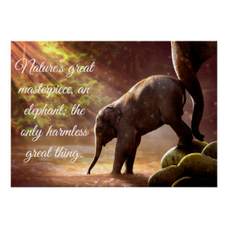 Beautiful Baby Elephant in A Pond Poster