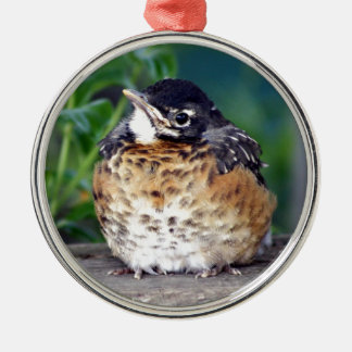 Beautiful Baby Robin Metal Ornament