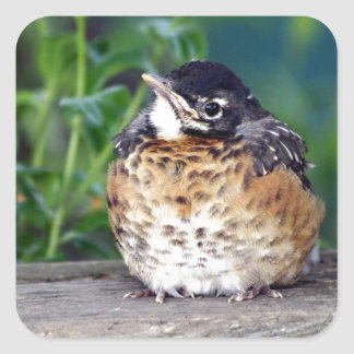 Beautiful Baby Robin Square Sticker