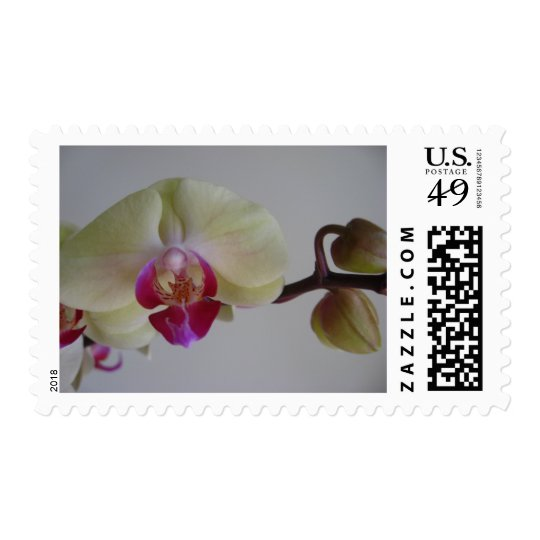 Beautiful Baby Yellow Orchids Postage