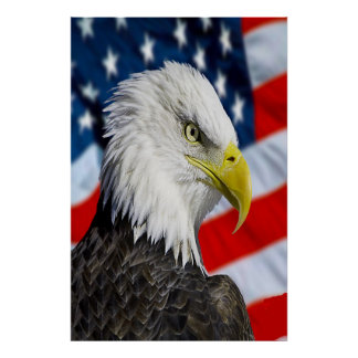 Beautiful Bald Eagle head  and a American flag 1 Poster