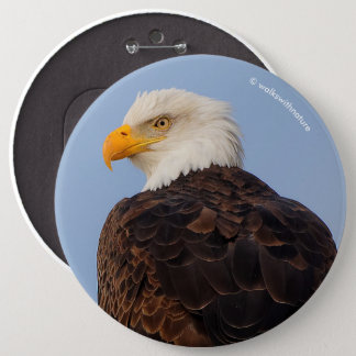 Beautiful Bald Eagle in a Tree Pinback Button