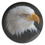 Beautiful bald eagle portrait plates