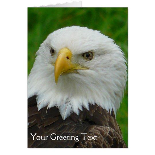 Beautiful Bald Eagle - Wild Bird Photograph Card