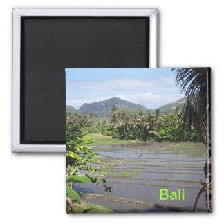 Beautiful Bali rice paddies 2 Inch Square Magnet