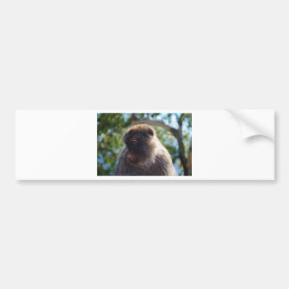 Beautiful Barbary Ape Bumper Sticker