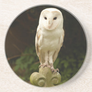 Beautiful Barn Owl Coaster