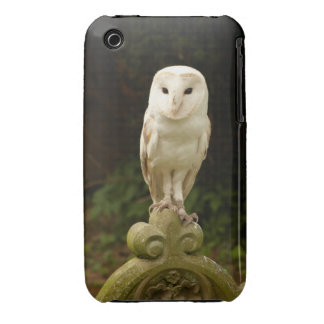 Beautiful Barn Owl iPhone 3 Barely There Case iPhone 3 Cases