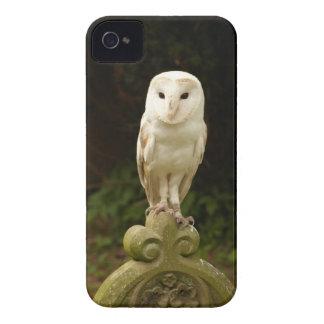 Beautiful Barn Owl iPhone 4/4S ID Case iPhone 4 Cases