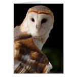 Beautiful Barn Owl notecard Greeting Card