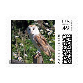 Beautiful barn owl postage