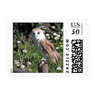 Beautiful barn owl postage
