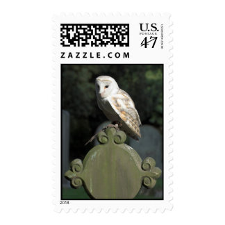 Beautiful Barn Owl Postage Stamp