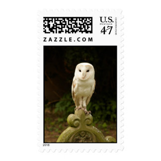 Beautiful Barn Owl Postage/Stamp Postage Stamp
