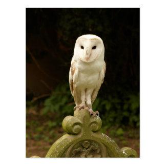 Beautiful Barn Owl Postcard