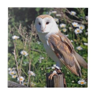 Beautiful barn owl tile
