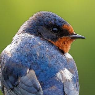 Beautiful Barn Swallow Classic Round Sticker