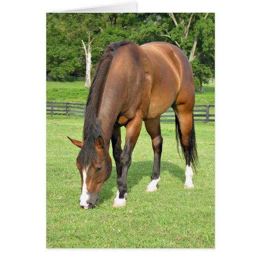 Beautiful bay horse card