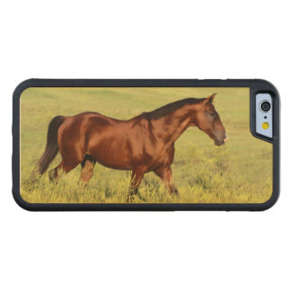 Beautiful Bay Horse Carved Maple iPhone 6 Bumper Case