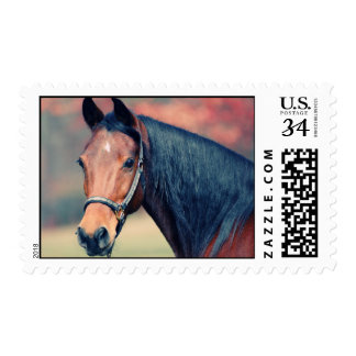 Beautiful Bay Horse Design Postage