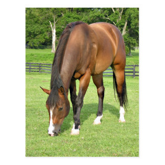 Beautiful bay horse postcard