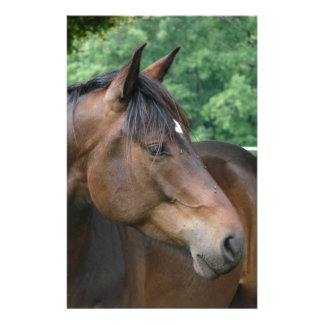 Beautiful Bay Horse Stationery