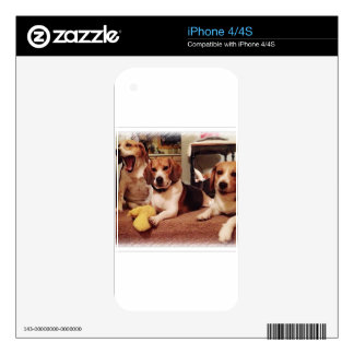 Beautiful Beagles iPhone 4 Decals