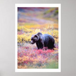 Beautiful Bear in Spring Flowers Print