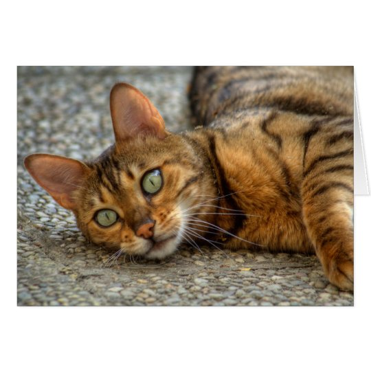 Beautiful Bengal Cat Card